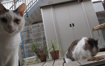 nyan_nakazawa.jpg