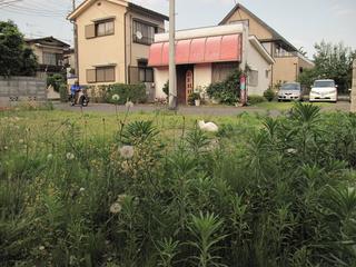 nyanko_niwa1.jpg